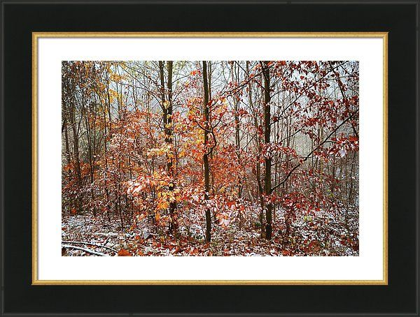 Jenny Rainbow Fine Art Photography Framed Print featuring the photograph Mix Of Seasons With Vibrant Touch by Jenny Rainbow