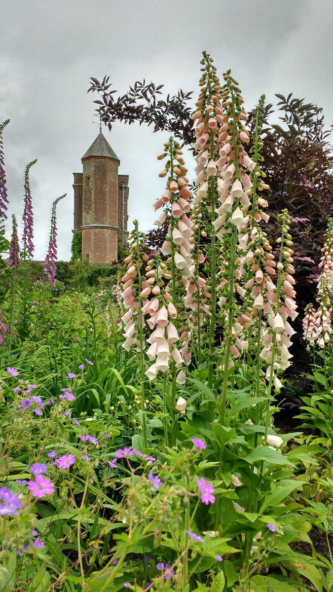 pagewoman: Sissinghurst Foxgloves  (by Emily Darby)  — FUCKITANDMOVETOBRITAIN