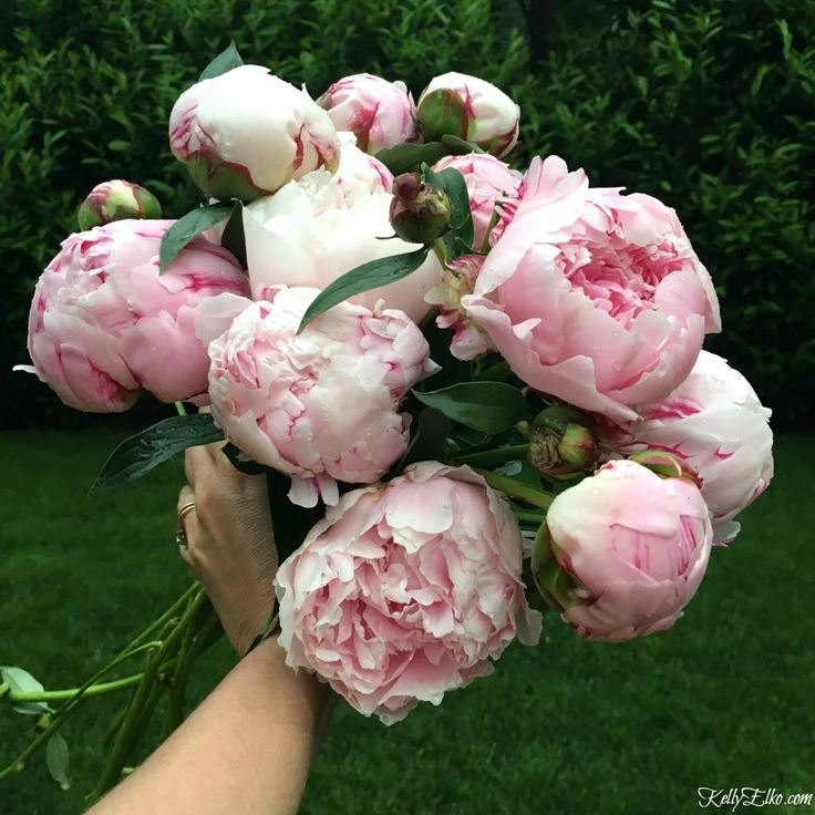 Love peonies? This free peony printables photo of an enormous bunch of pink blooms freshly picked from the garden is stunning! Print and frame. Great gift idea kellyelko.com