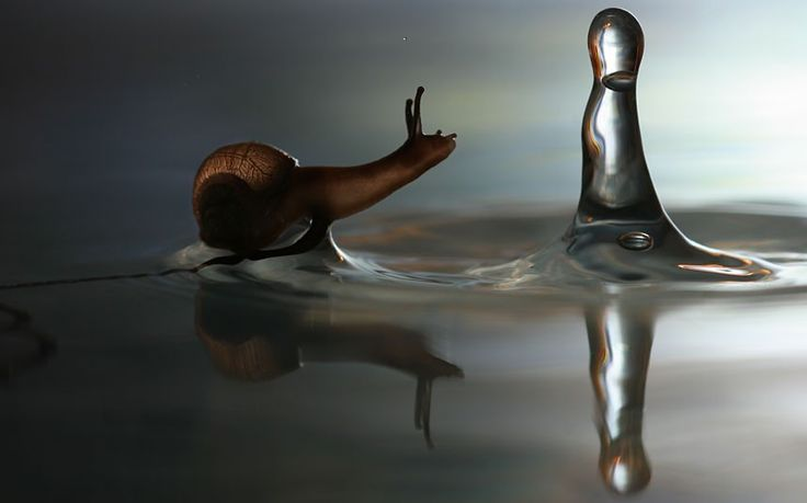 The Snail and the Raindrop, by Vadim Trunov | The Best of Russia 2012 photography competition winners