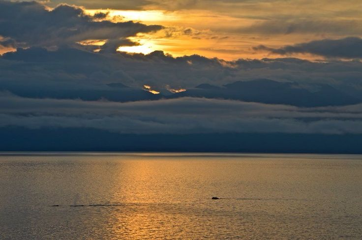 Il mare è un trattato di pace tra la stella e la poesia  (Alain Bosquet) #barca #laspezia #liguria #barcavela #weekend #addiocelibato #addionubilato #regate #costaazzurra #eventi #skipperclub #vacanze #mare #navigazione #altura #sardegna #portofino #portovenere #settimanainbarcavela #agosto