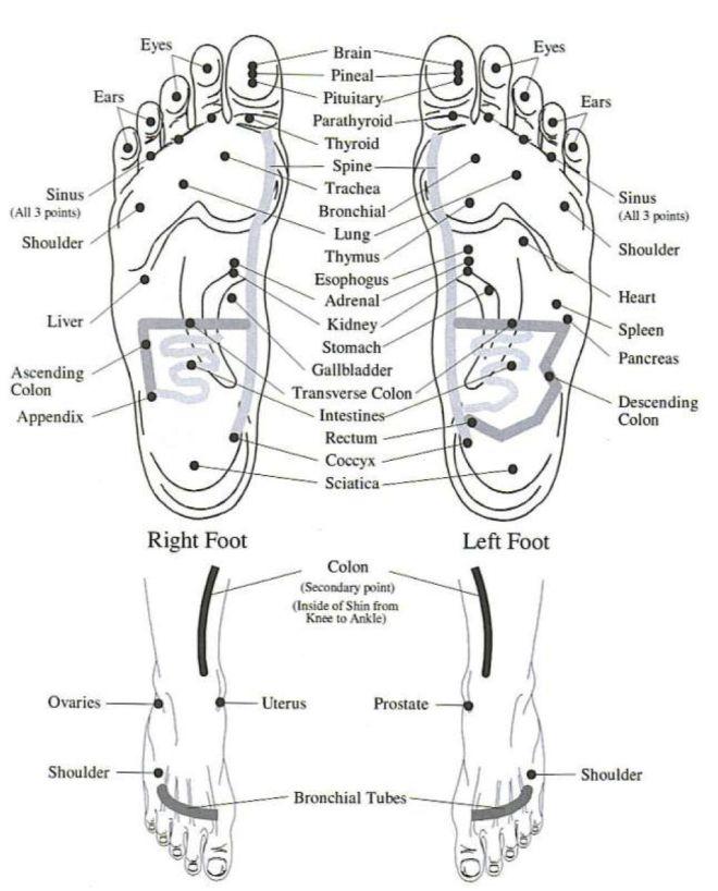 Vita Flex Foot Chart | The Oil Essentials: How-Tos of Young Living Essential Oils