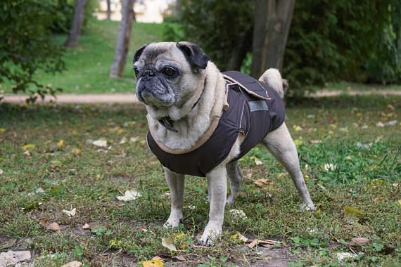 Pug Winter Dog Coat Dog Jacket With Full Belly Cover