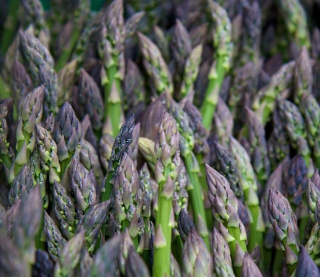 Agriturismo Biologico Sant'Egle, Tuscany, Italy. We produce our products - vegetables, fruit, spirulina, olive oil, wine and saffron - with love and passion, respecting the natural cycle of nature http://www.organicholidays.co.uk/at/3083.htm