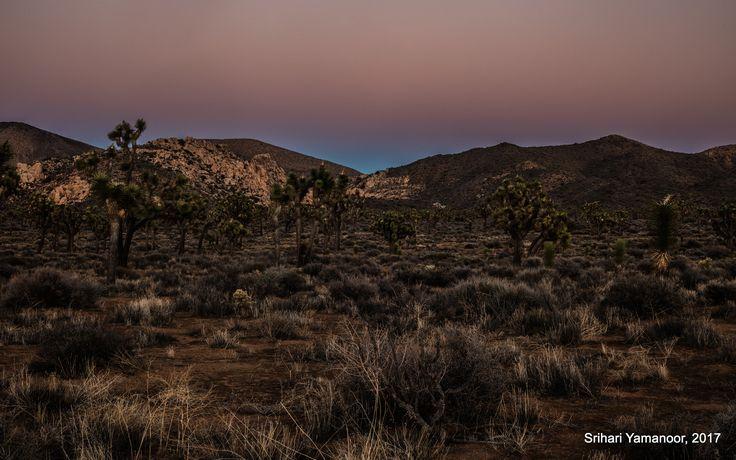 Dusk Vibes - A quiet evening at Joshua Tree National Park
