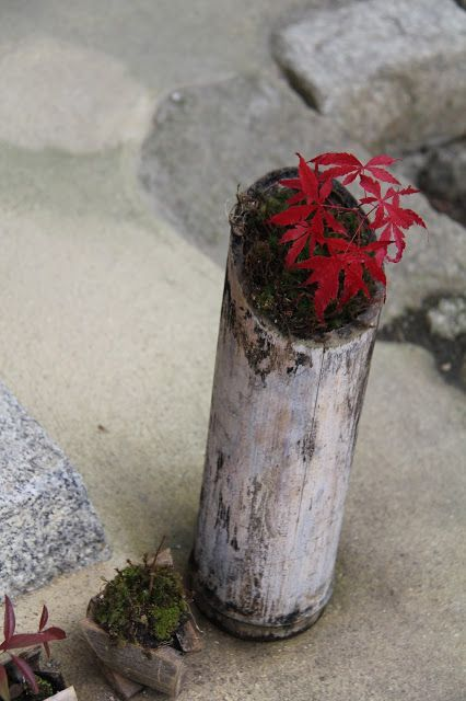 Three new KYOTO WINTER CUISINE AND CULTURE TOURS . December 2014  to Feb 2015. Don't miss out - be on my mailing list. Brochures to be released in just a few days!