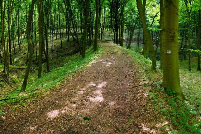 Elveszett erdei vasutak nyomába eredtünk