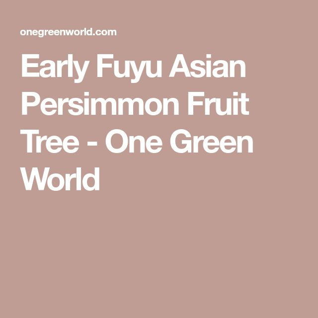 Early Fuyu Asian Persimmon Fruit Tree - One Green World