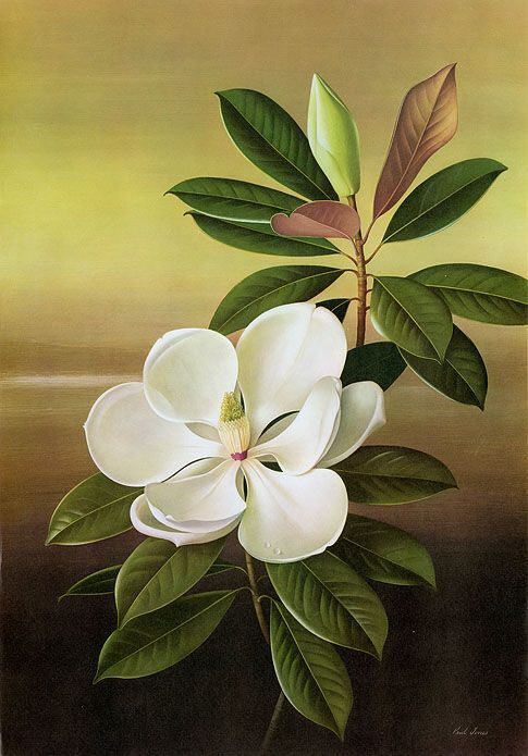 #Magnolia #MagnoliaInn / Paul Jones Flora Magnifica and Flora Superba botanical prints,. Source: http://panteek.com/PaulJones/index.htm