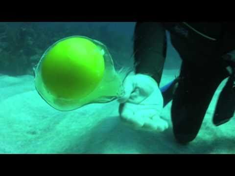 What happens when you crack an egg 60 feet under water. / the little finger spinning gesture he uses to get the egg to move is really nice