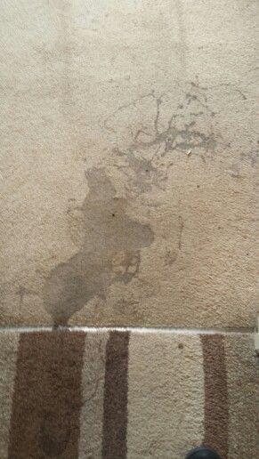 Calpol on a carpet in Drogheda