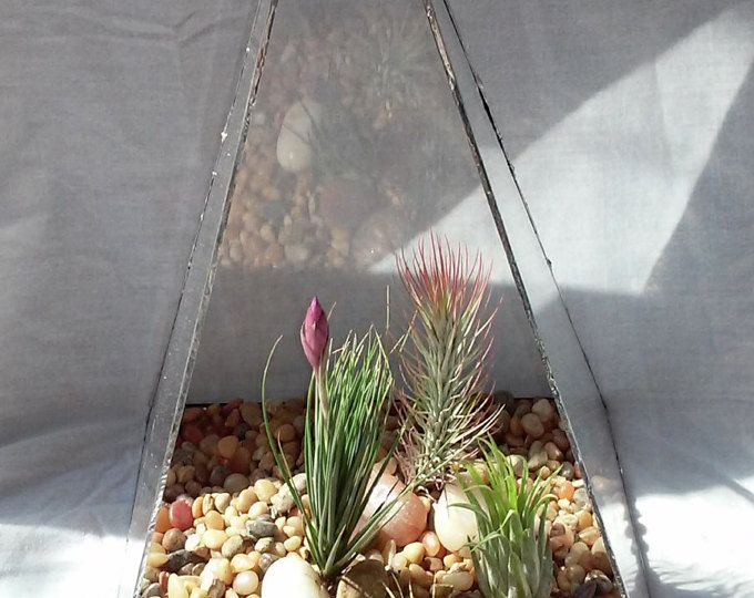 Recycled Glass Large Modern Tabletop  Terrarium