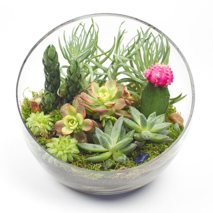 """The Big Ol' Egg.""  Modeled after the famous egg chair by Arne Jacobsen, it will be a spacious modern home for your juicy little succulents.  DIY terrariums for your loved ones or for yourself.      Juicy kisses!  www.JuicyKits.com  DIY succulent terrariums for you and your loved one."
