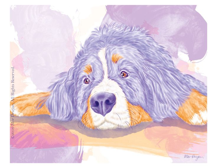 Happy to share with you one of my sweet colorful Bernese paintings available on my #etsy shop: Bernese Mountain Dog Colorful Art Print Of Original Painting-8x10-Pet Print-Nursery Decor-Pet Portrait-Dog Gifts-Pet Art-Wall Decor #art #print #giclee #colorfulprint #dogportrait #dogdrawing #walldecor #nurserydecor #artprint #cute #petportrait http://etsy.me/2oOKbzm
