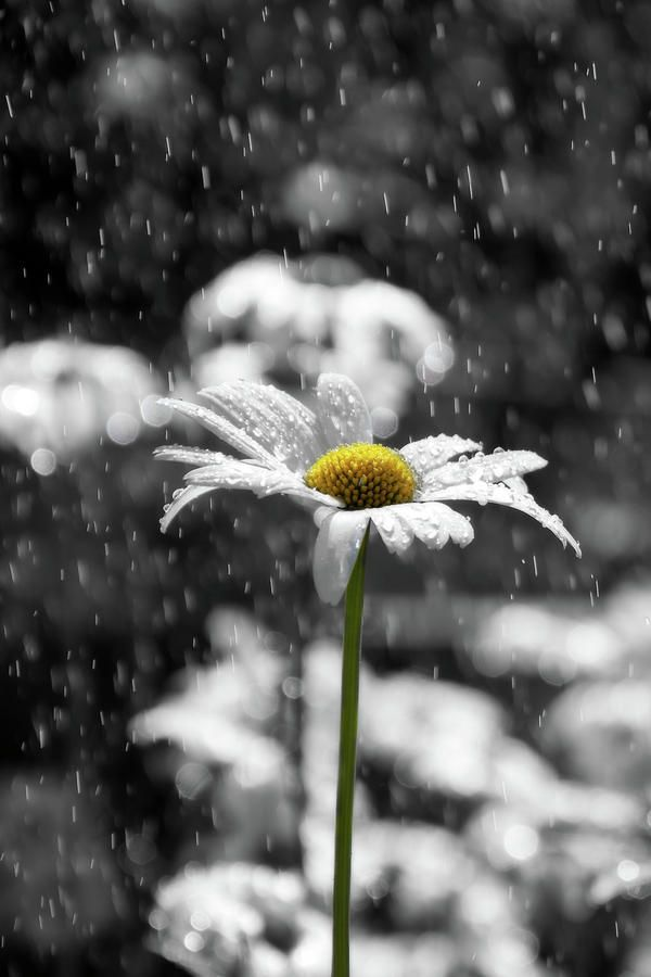 Sunny Disposition Despite Showers~ .............ALWAYS...............