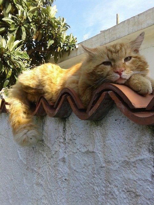 dormir sur le mur pour surveiller ma maison ET le chat du voisin
