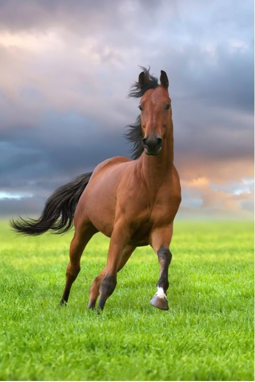 Best 25 Horse pictures ideas on Pinterest Horse photography