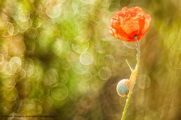 Poppies and ......