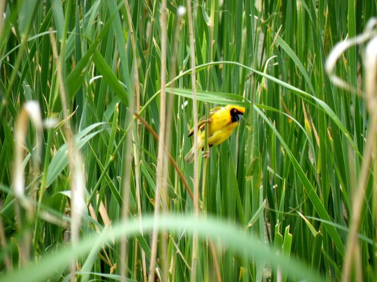 #bird #pajaro #green #plants #color