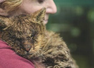 Une femme serre dans ses bras un chat réputé intouchable, et l'animal est tellement content qu'il la remercie en poussant un miaulement adorable…