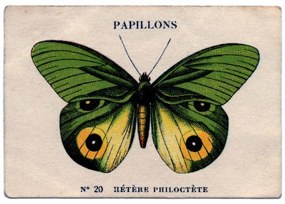 Vintage Image - French Butterfly #2 - The Graphics Fairy