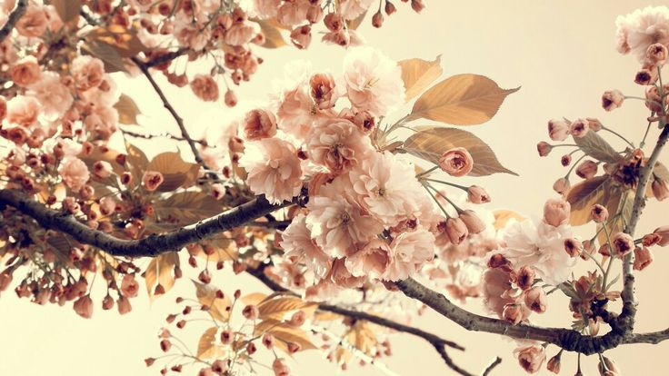 Vintage cherry flowers