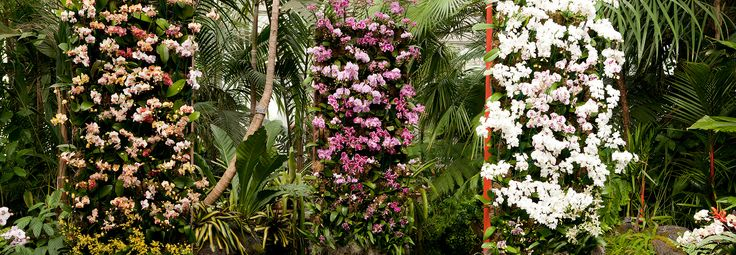 Orchid wall