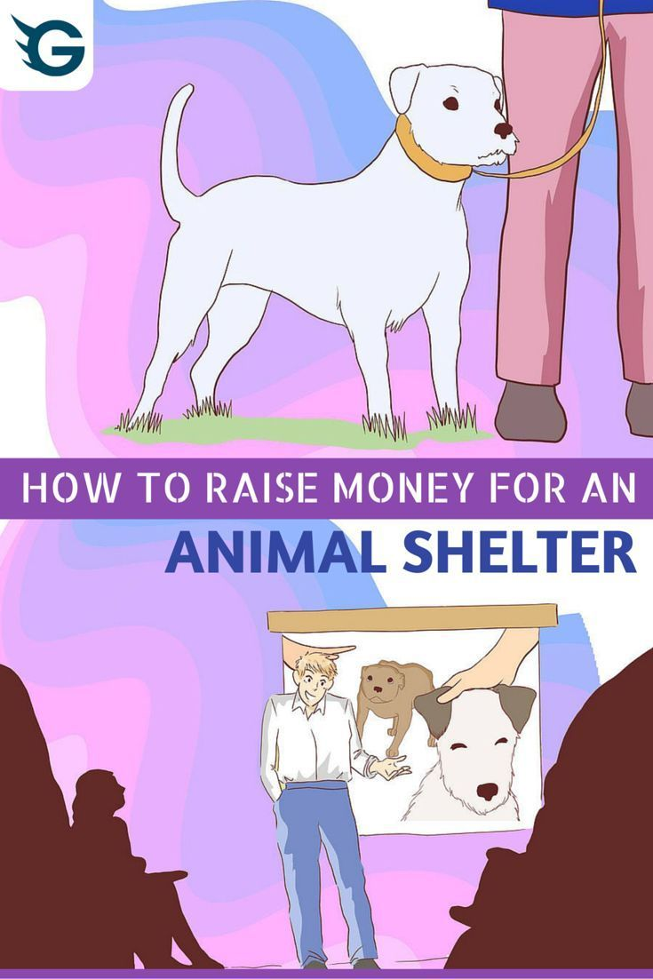 How To Raise Money For An Animal Shelter Animal Shelter Fundraiser Animal Shelter Animal Shelter Design