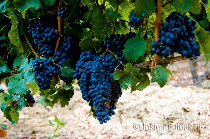 Rijpende druiven, Zuid-Afrika.