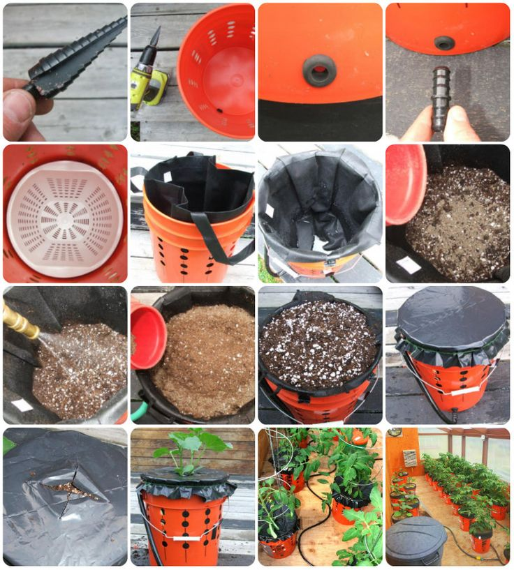 A Genius Way To Grow Peppers And Tomatoes In (Self Watering) Bucketsu2026