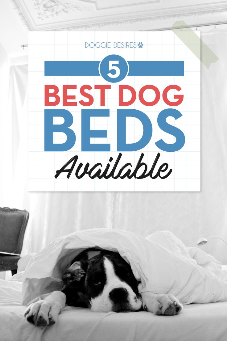 5 Best Dog Beds Available >> http://doggiedesires.com/5-best-dog-beds-available/