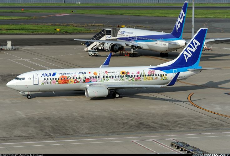 ANA Airways (All Nippon Airways) (JP) Boeing 737-881(WL) JA85AN aircraft, with the sticker '' Inspiration of Japan'' on the airframe, painted in ''Tohoku flower'' special colors, departing to Tottori in an early summer evening from Japan Tokyo Haneda Int'l Airport. 03/07/2016. (Lillies,daisies & other 17 flowers are symbol of the rebirth of Tohoku region from the 2011 earthquake & tsunami).