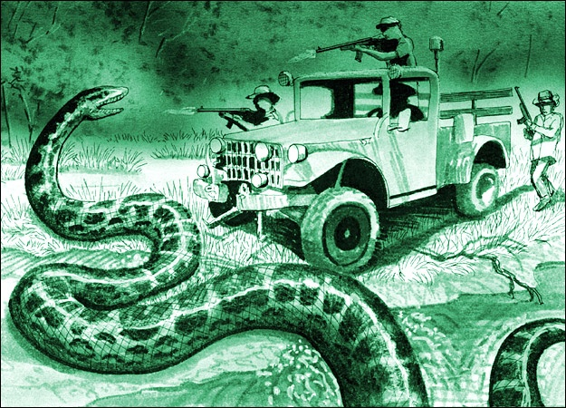 """In 1948, a group of native Brazilians claimed to have captured a 131-foot long snake deep in the Amazon Rainforest. To date, biologists have yet to recognize a living reptile in excess of 33 or 34 feet, but some believe this giant anaconda, or """"megaconda,"""" was in fact a real specimen. The natives called the terrifyingly enormous snake a """"Matatoro,"""" or bull killer, after the half-swallowed bull they claimed to have found inside of it."""