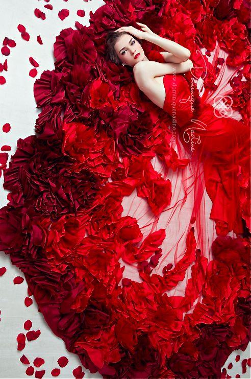 Dominique Nadine #red #rose