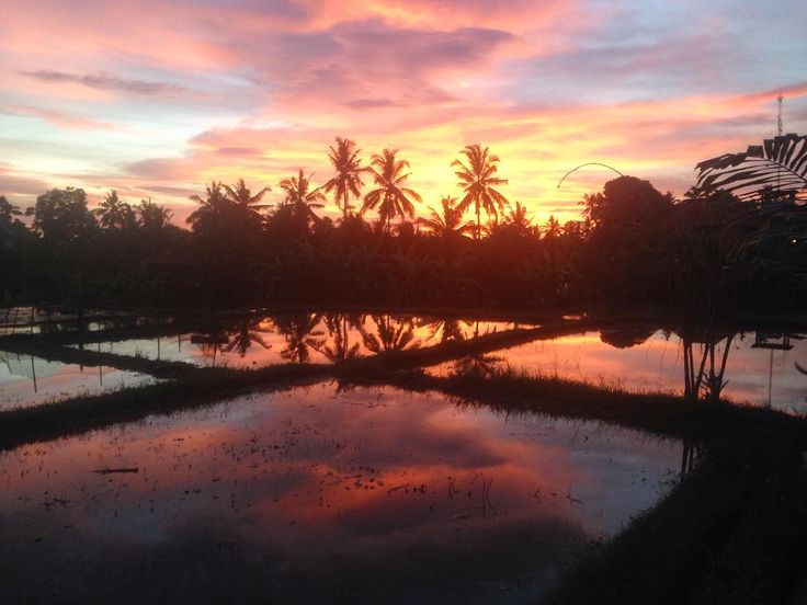 Beautiful Bali sunset overlooking the rice terraces in Ubud. Balistyle.co.uk