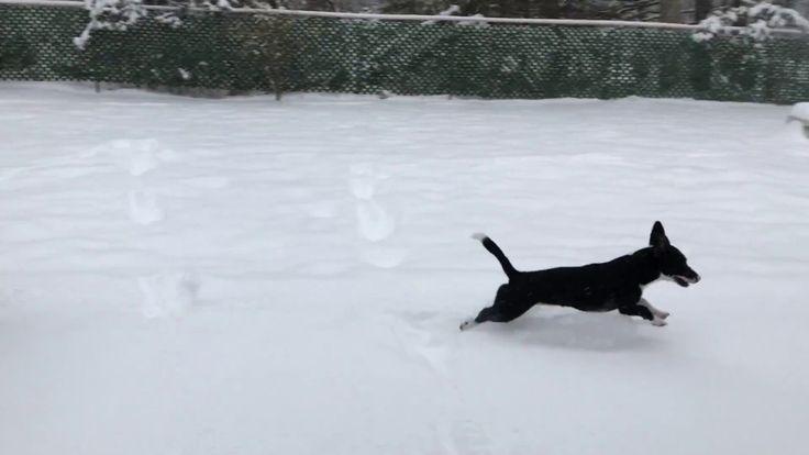 Kali the corgi enjoys the first snow fall of the season https://www.youtube.com/watch?v=-SmzZd-B__o