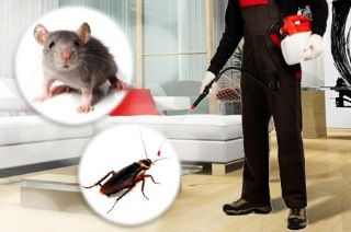 Commercial Pest Control In Brisbane If you already have a pest management program but you're still seeing pests in your premises, then your current pest control thirstypestcontrol.com.au