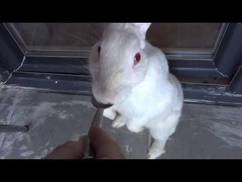 pamuk muzlu puding yiyiyor - YouTube
