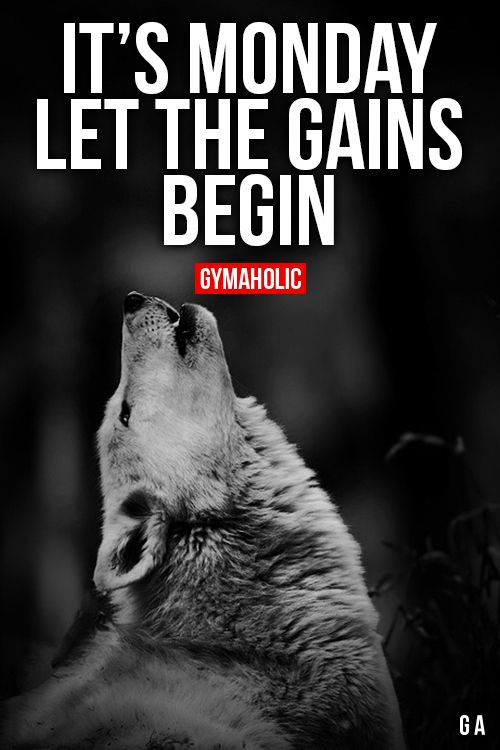 """Double tap if you never miss a Monday! As the wolf says """"Let the gains begin"""" what are you going to do this week to make this happen!"""