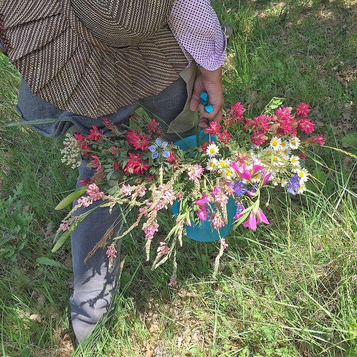 La Rosa Canina e i Fiori di Puscina insieme per un corso su la creazione di una composizione di fiori selvatici. Backstage Iphonepics: Tommaso Torrini