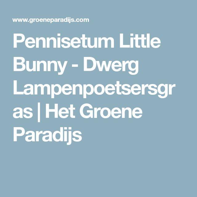 Pennisetum Little Bunny - Dwerg Lampenpoetsersgras | Het Groene Paradijs