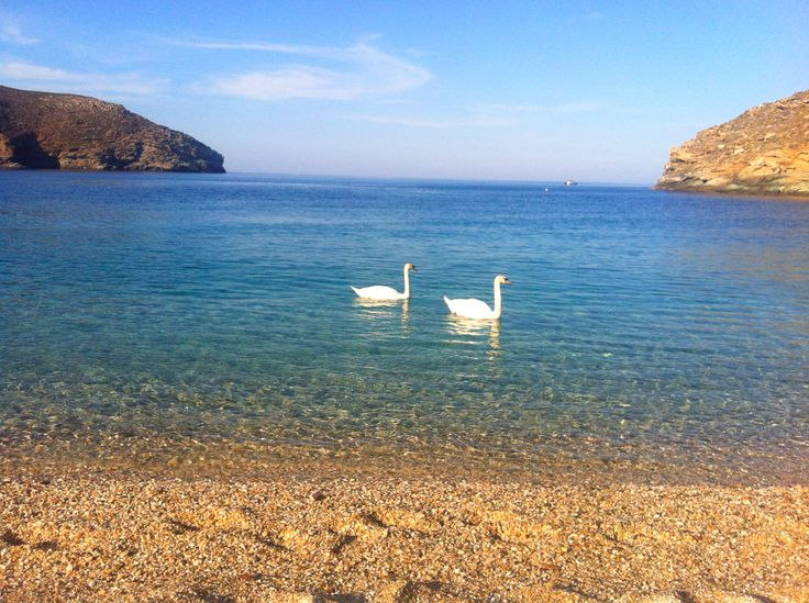 Swans in #Achla #beach, #Andros, #Greece