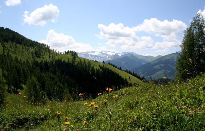 http://www.grossarlerhof.at/de-sommer-grossarl.htm  Bergsommer im Großarltal