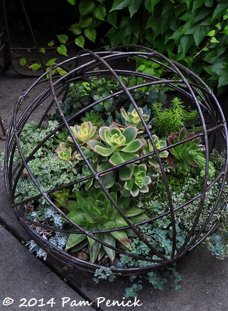 Succulent-filled wire sphere. Love just around the bend at Bella Madrona: Portland Garden Bloggers Fling   Digging