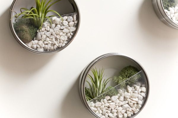 Mini terrariums are adorable! Almost any small container will do. We love the idea of gluing a magnet on the back!