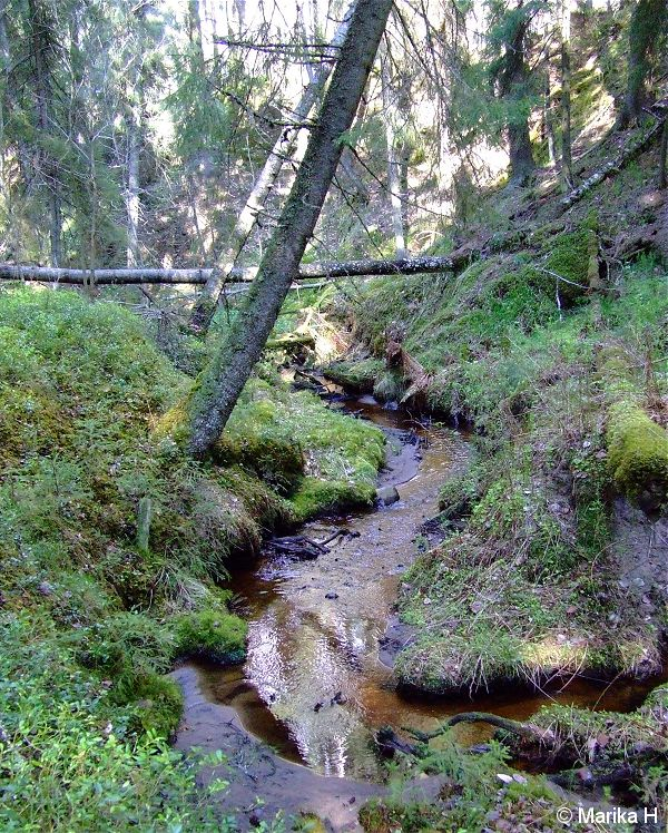 Kellaripuro, Finland. Creek