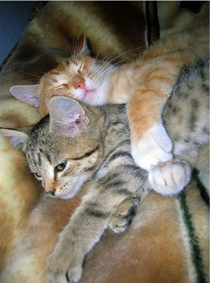 Kitten Togetherness
