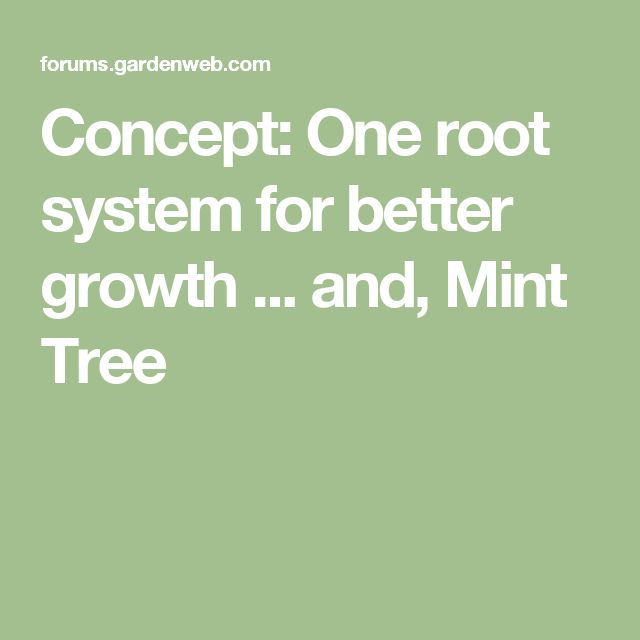 Concept: One root system for better growth ... and, Mint Tree