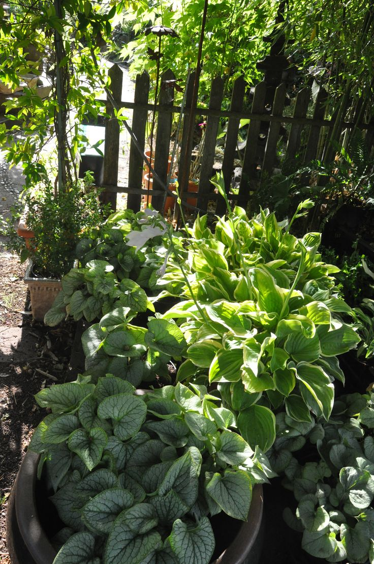 Jardin Taffin à Montmorency (95)