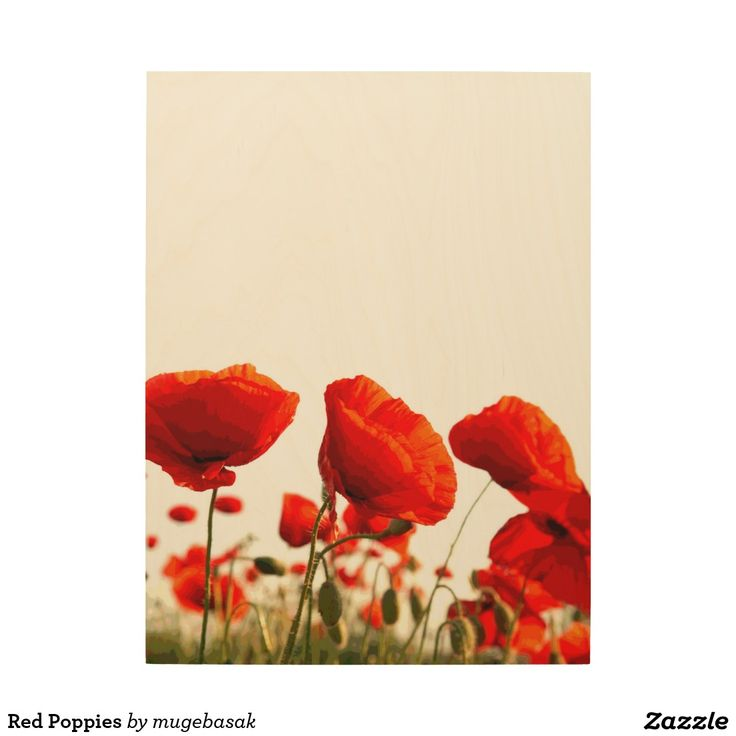 Red Poppies Wood Canvases